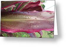 Abstract Leaf Greeting Card