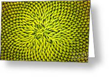 Abstract Sunflower Pattern Greeting Card