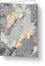 Abstract Tree Bark II Greeting Card