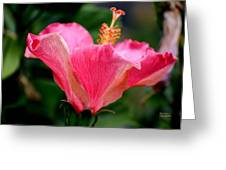 Abundantly Pink Greeting Card