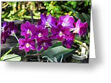 Accented Purple Orchid  Greeting Card