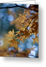 Acer Autumn Greeting Card