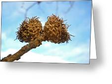 Acorns Have Left The Nest Greeting Card