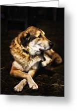 Adam - The Loving Dog Greeting Card by Bill Tiepelman