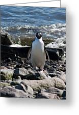 Adelie Penguin 21 Greeting Card