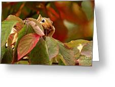 Adorable Chipmunk Hiding In Autumn Leaves Greeting Card