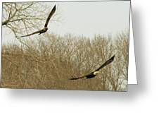 Adult And Immature Bald Eagle Flying Greeting Card