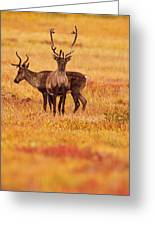 Adult Caribou In The Fall Colours Greeting Card