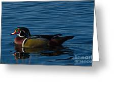Adult Male Wood Duck Greeting Card