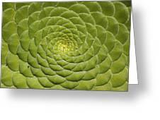 Aeonium Tabulifrome Greeting Card