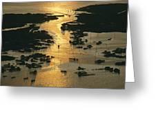 Aerial Shot, Tangier Island, Chesapeake Greeting Card