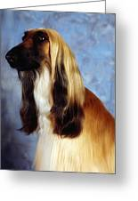 Afghan Hound Greeting Card