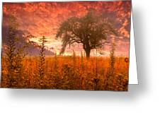 Aflame Greeting Card by Debra and Dave Vanderlaan