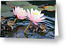 Afloat Among Lillies Greeting Card