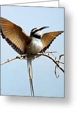 African Bee Eater Greeting Card