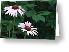 African Daisies 6  Greeting Card