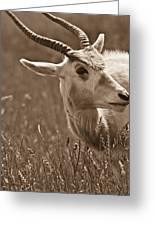 African Grassland Feeder 2 Greeting Card