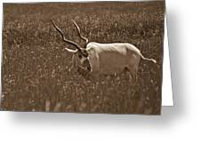 African Grassland Feeder Greeting Card