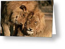 African Lion Panthera Leo Two Males, Mt Greeting Card