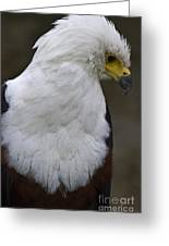 African Sea Eagle 5 Greeting Card by Heiko Koehrer-Wagner