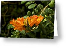 African Tulip Tree Greeting Card