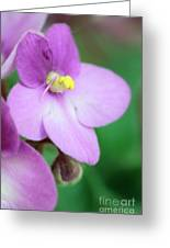 African Violet Flower Greeting Card