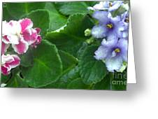 African Violets Intertwined I Greeting Card
