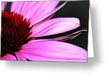 After The Bloom Greeting Card