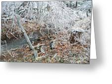 After The Ice Storm In Maine Greeting Card by Jeannie Atwater Jordan Allen