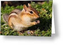 Afternoon Snack - Eastern Chipmunk  Greeting Card