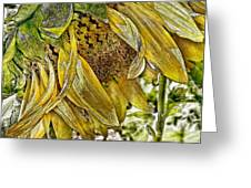 Afternoon Sunflower Greeting Card