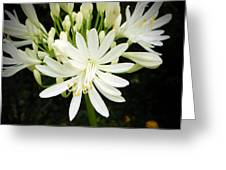 Agapanthus Close-up Greeting Card