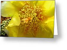Agave 2010 Greeting Card
