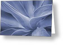 Agave In Blue Greeting Card