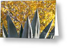 Agave Spikes In Autumn Greeting Card