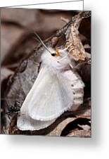 Agreeable Tiger Moth With Ant Greeting Card