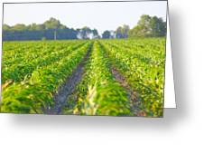 Agriculture- Corn 1 Greeting Card