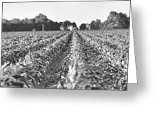 Agriculture- Corn 2 Greeting Card