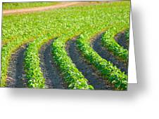 Agriculture- Soybeans 3 Greeting Card