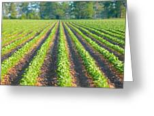 Agriculture-soybeans 5 Greeting Card