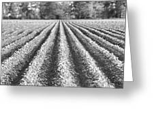 Agriculture-soybeans 6 Greeting Card