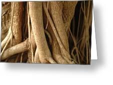 Air Roots Greeting Card by Noah Katz