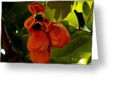 Akee Greeting Card