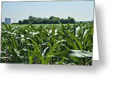 Alabama Field Corn Crop Greeting Card