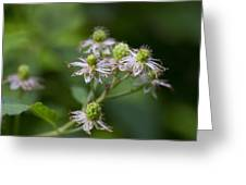 Alabama Wild Blackberries In The Making Greeting Card