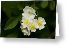 Alabama Wildflower Roses - Rosa Multiflora Greeting Card