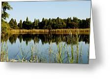 Alafia River State Park Greeting Card