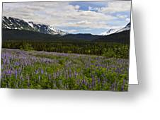 Alaska Lupine Greeting Card