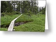 Alaska Meadow Trail Greeting Card