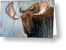 Alaskan Bull Moose Greeting Card